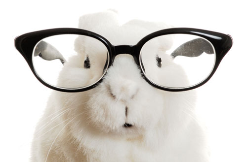 Why rabbits don't wear glasses…
